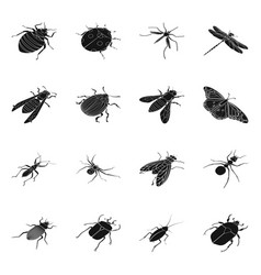 isolated object wings and wing icon collection vector image