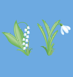 Lilies of the valley and snowdrops vector