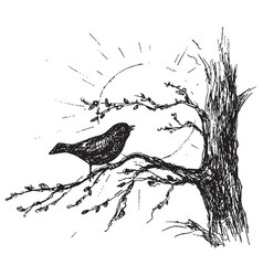 Sketch bird sings on tree vector
