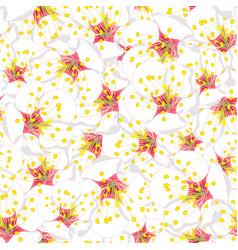 white plum blossom flower seamless background vector image