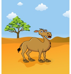 Camel in the savanna vector