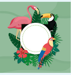 exotic birds cartoons vector image