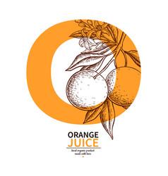 Orange label drawing citrus fruit engraved vector