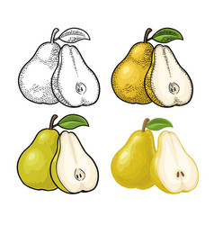 pear whole and half with leaf vintage color vector image