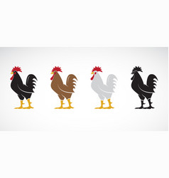Rooster or cock design on white background animal vector