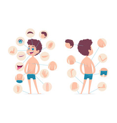 boy body parts young human school male kid vector image