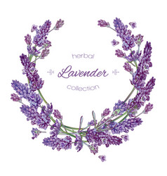Lavender flowers wreath vector