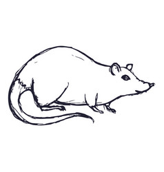 rat or mouse hand drawn on white background vector image