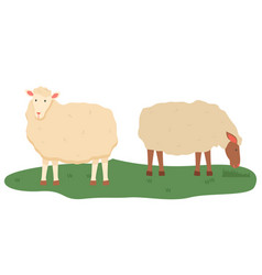 sheep on pasture animals livestock farming vector image