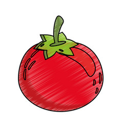 drawing tomato food nutrition vector image vector image