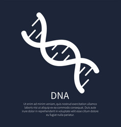 Dna macromolecule human individual genetic code vector