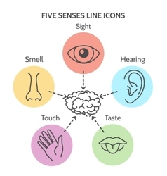Five senses line icons vector image