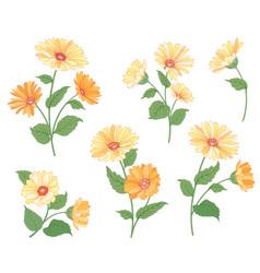 flower calendula bouquet set floral summer garden vector image