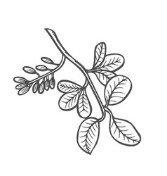 forest tree branch with leaves vector image