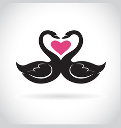 two loving black swans and pink heart on white vector image