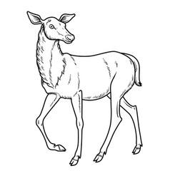 Elegant sika deer vector