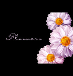 pink flowers isolated on black background vector image