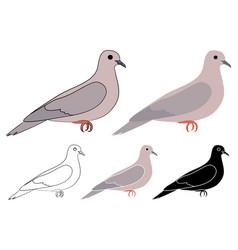 Pomba de bando bird in profile view vector