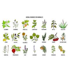 Best herbal remedies for wrinkles vector