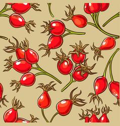 dog rose berries pattern vector image