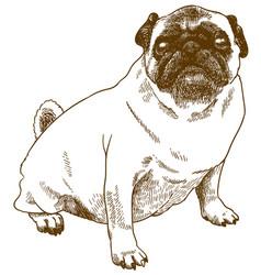 Engraving antique pug dog vector