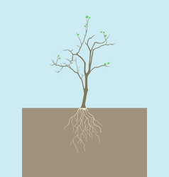 graphic of tree with root vector image