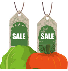 vegetables shopping sale offer vector image