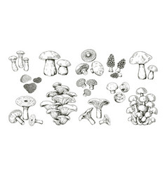 Mushroom sketch realistic hand drawn outline vector