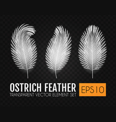 Realistic feathers set elegant isolated ostrich vector