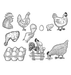 Chicken Clipart Black And White Vector Images Over 200