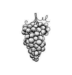 grape design vector image