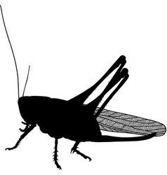 insect pest locust vector image