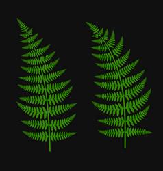 green fern leaf set vector image