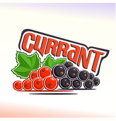 Currant still life vector