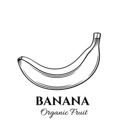 hand drawn banana icon vector image