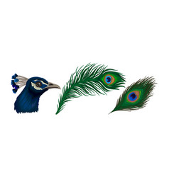 Peafowl or peacock head with crest and bright vector