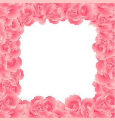 pink carnation flower border2 vector image