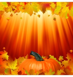Pumpkins and leaves in the sun EPS 8 vector