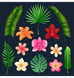 Tropical Flowers and Palm Trees Leaves Set vector image