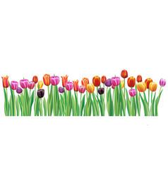 Border with multicolor tulips vector