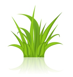 Green grass isolated on white background vector image