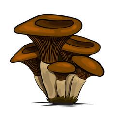 mushrooms edible mushrooming poster vector image