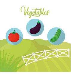 vegetables fresh farm agriculture vector image