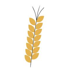 Wheat spike isolated icon vector