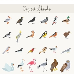 Birds icons Colorful cartoon birds vector image