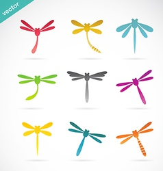 group of colorful dragonfly vector image vector image