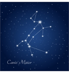 Canis maior constellation vector