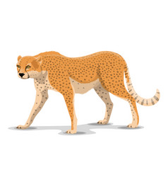 cartoon cheetah wild animal vector image