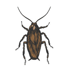 cockroach bug color sketch engraving vector image