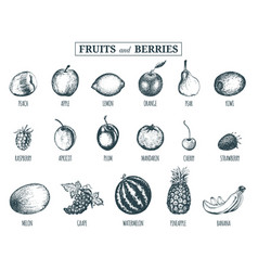 fruits and berries hand drawn vector image